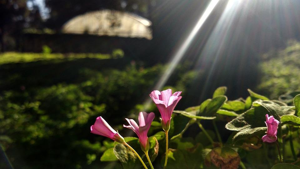 Physalis Grass, Spring, Flower Close Up
