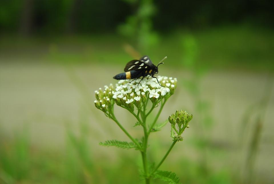 Nature, Insect, Lawn, Summer, Flower, Closeup, Garden