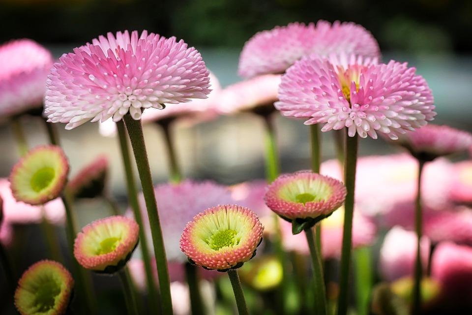 Nature, Plant, Flower, Summer, Color, Close Up, Bellies
