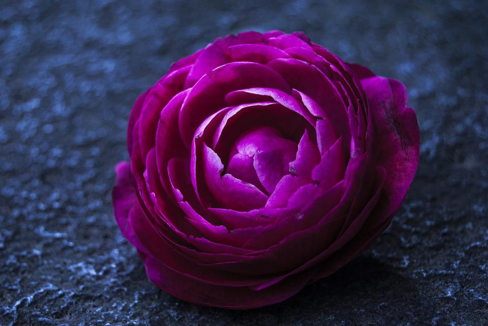 Flower, Colors, Flower Color Pink, Flowers, Color Pink