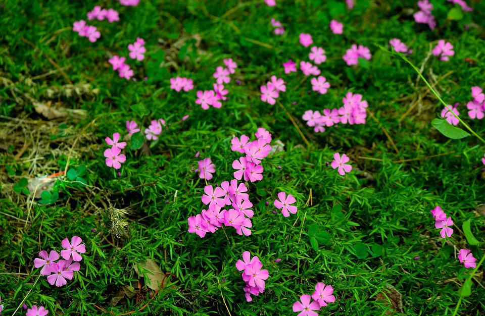 Flower, Colorful, Nature, Spring, Pink, Color, Green