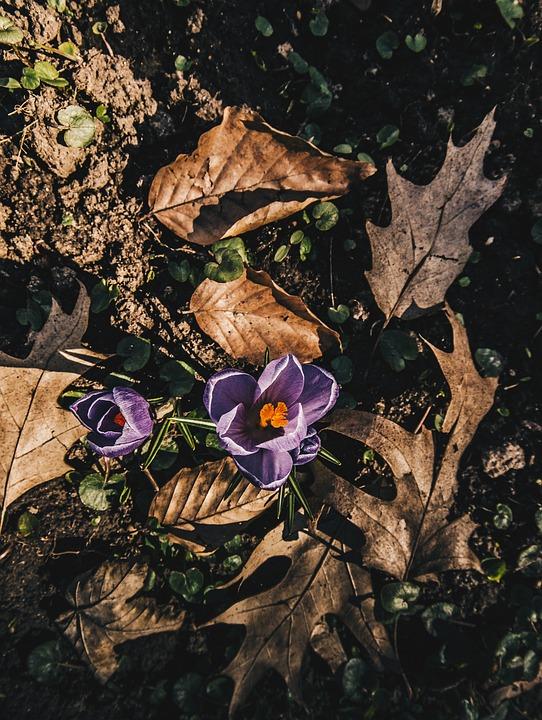 Nature, Leaf, Plant, Flower, Color, Krokus, Beautiful