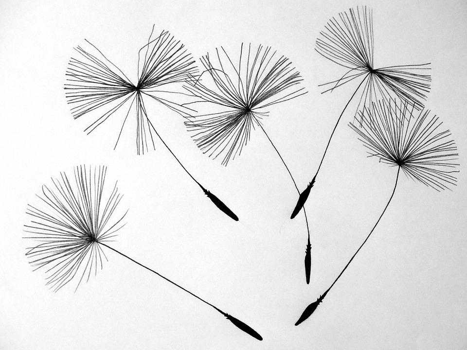 Seeds, Dandelion, Flower, Pointed Flower, Nature