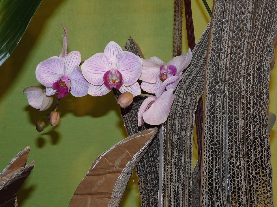 Flower, Arrangement, Floristry, Deco, Plant