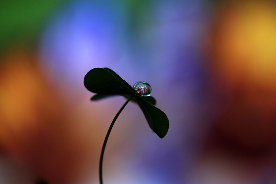 Drop, Water Drop, Flower, Clover, Macro, Reflection
