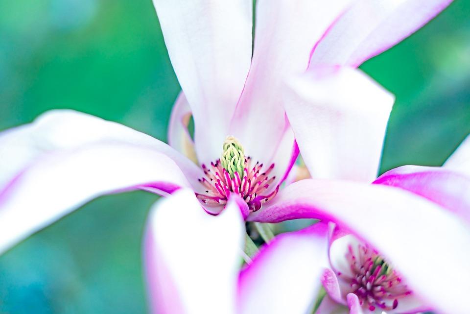 Nature, Flower, Summer, Plant, Elegant