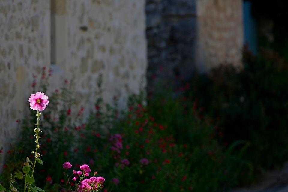 Flower, House, Facade, Pink