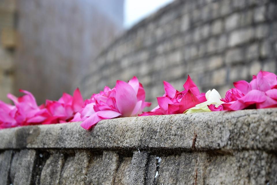 Flower, Temple, Faith, Buddhism
