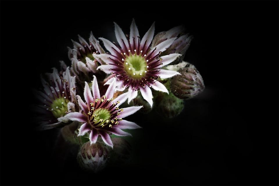 Flower, Blossom, Plant, Floral, Blooming, Flora, Bloom
