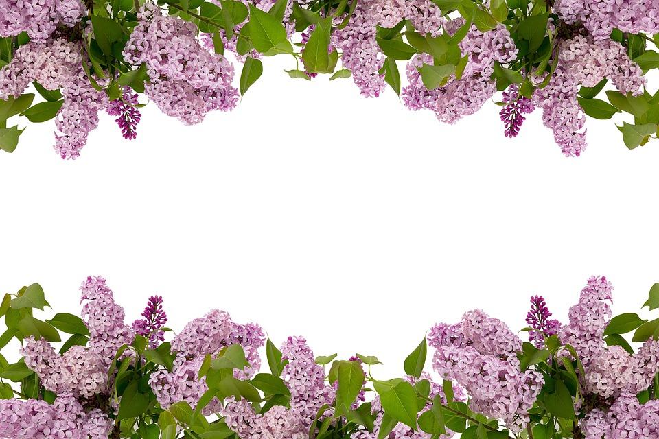 Flora, Leaf, Flower, Nature, Floral, Spring, Summer