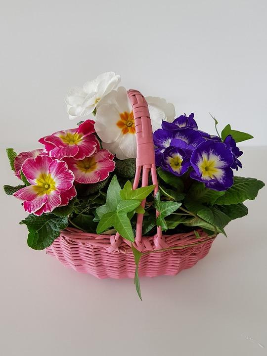 Flower Basket, Primroses, Primula, Flower, Spring