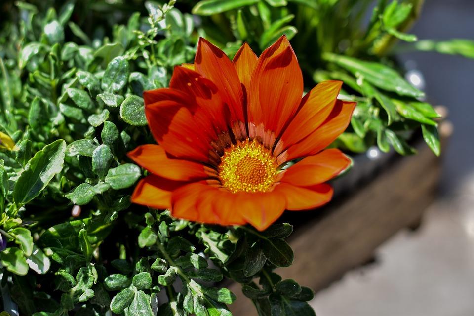 Flower, Nature, Spring, Flower Gérbel