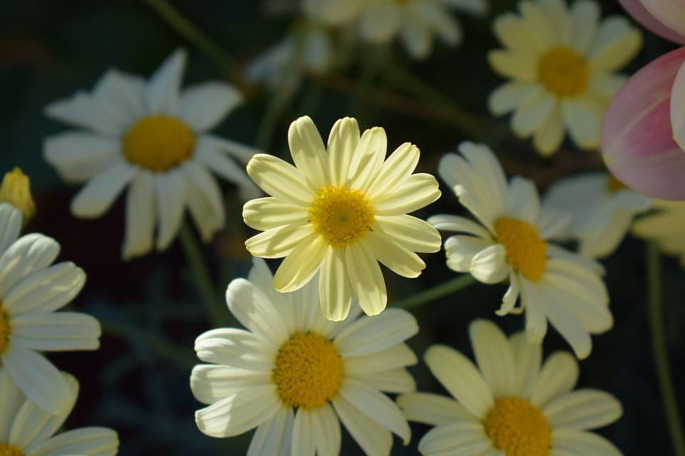 Free photo flower flowers margurit yellow flower yellow max pixel margurit yellow flower yellow flower flowers mightylinksfo