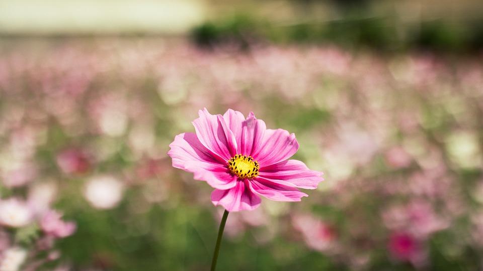Flowers, Flower, Na, Nature, Pink, Leaves, Macros
