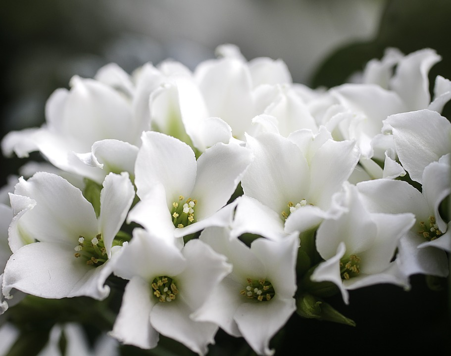 Free photo flower flowers potted plant plants white plant max pixel flowers white flower plants potted plant plant mightylinksfo