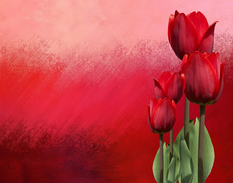 Spring, Tulips, Nature, Flowers, Flower, Red
