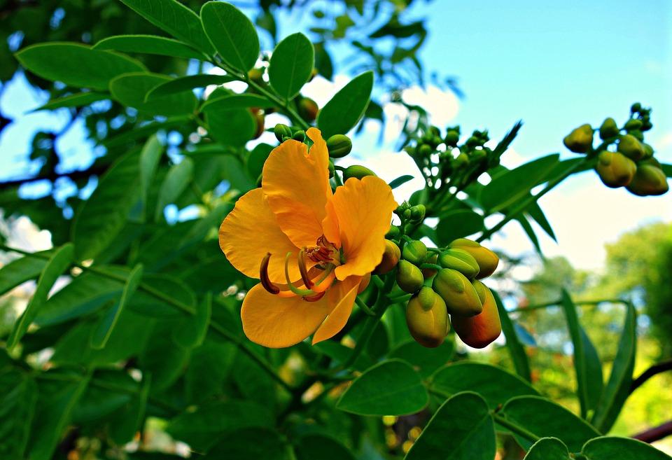 Flower, Shrub, Pistil, Stamen, Foliage, Yellow Flower