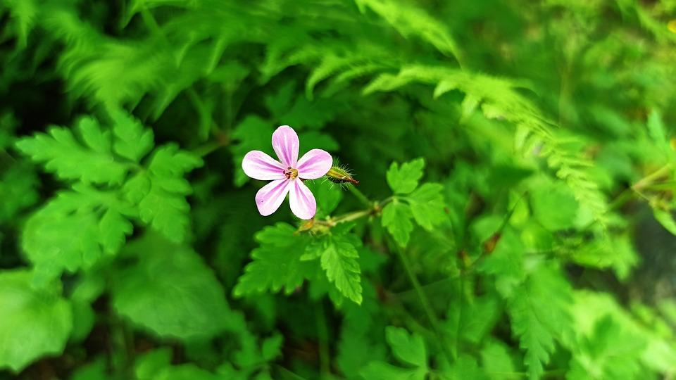 Forest, Flower, Green, Nature, Summer