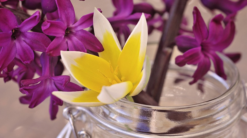 Free photo flower fragrant flowers spring flower hyacinth max pixel hyacinth flower spring flower fragrant flowers mightylinksfo
