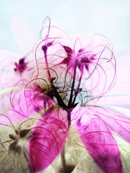 Flower, Floral, Fuchsia