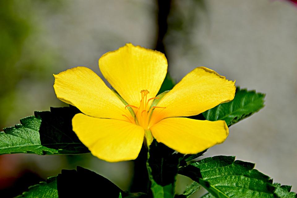 Flower Garden, Blossom, Bloom, Yellow, Close Up