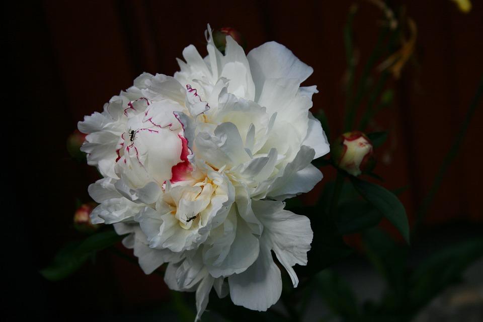 Blossom, Bloom, Flower Garden, Close