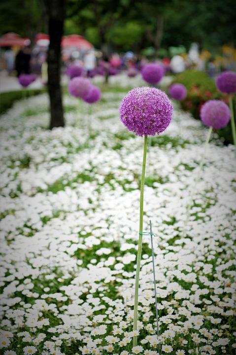 Flower Garden, Flowers, Garden