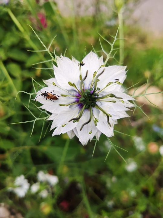 Flower, Garden, Insect