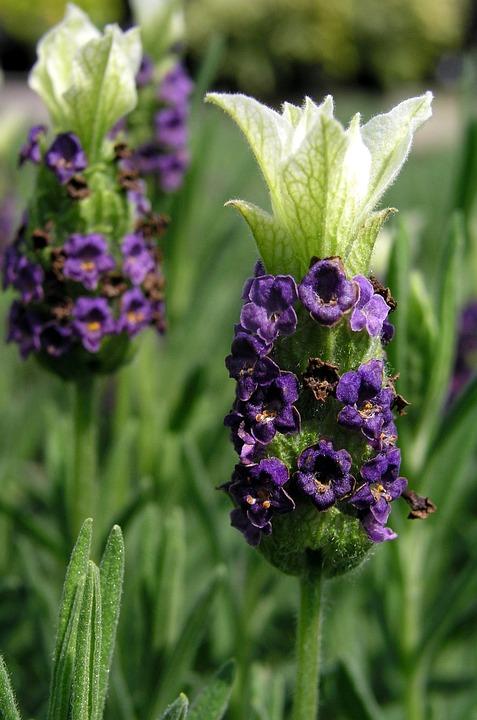 Flower, Nature, Flora, Leaf, Garden, Floral, Petal