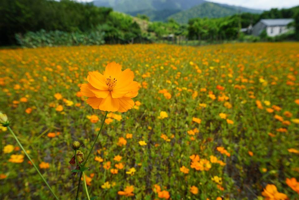 Flower, Flowers, In Full Bloom, Garden, Petal, Natural