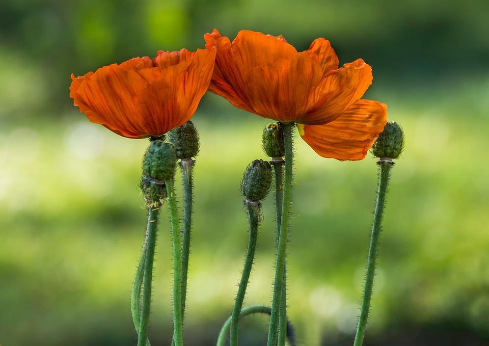 Nature, Flower, Plant, Summer, Outdoor, Garden, Color