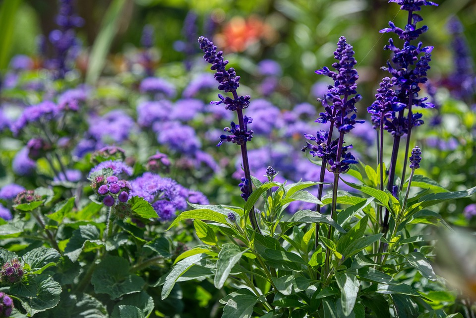 Flower Garden, Flowers, Purple, Violet, Small Flowers