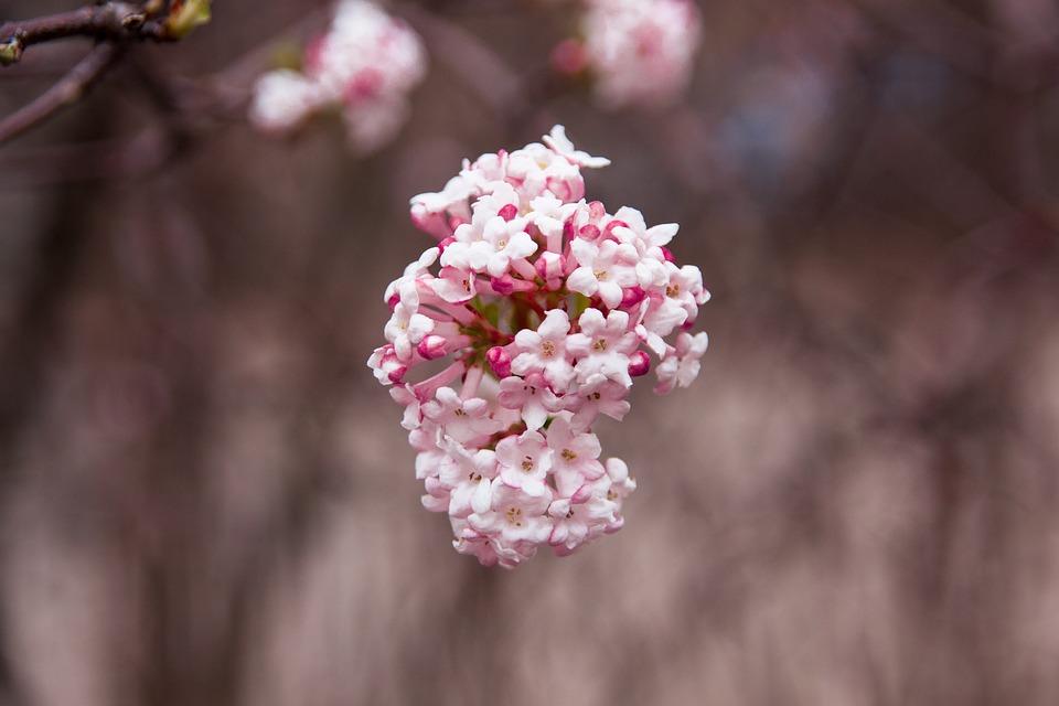 Spring, Nature, Garden, Close Up, Plant, Flower