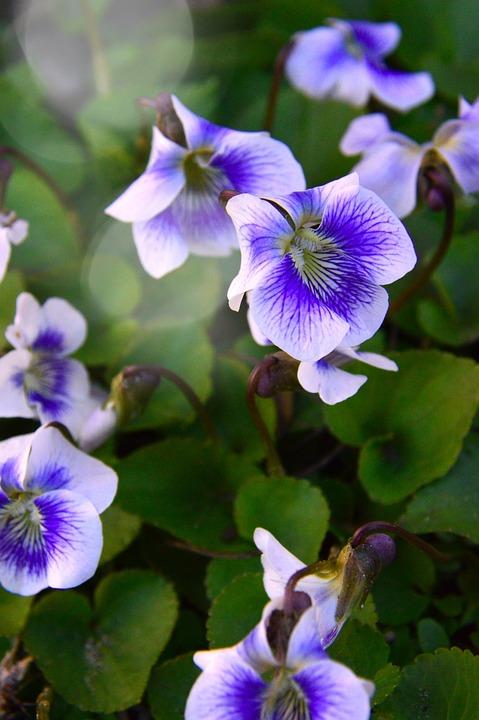 Flower, Outdoors, Nature, Plant, Garden, Violet