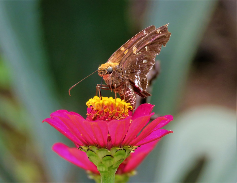 Butterfly, Flower, Garden, Insect, Wing