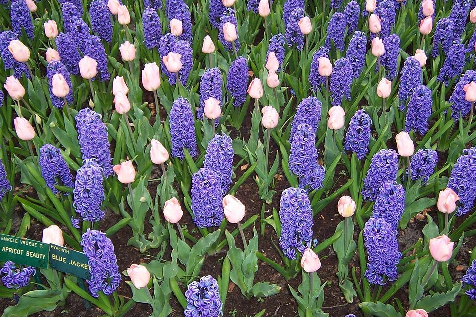 Dahlia, Blossom, Floral, Flower, Gardening, Green