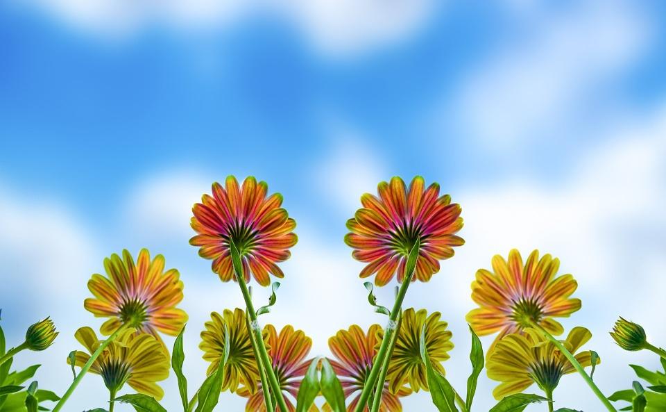 Flower, Summer, Spring, Autumn, Gardening, Garden