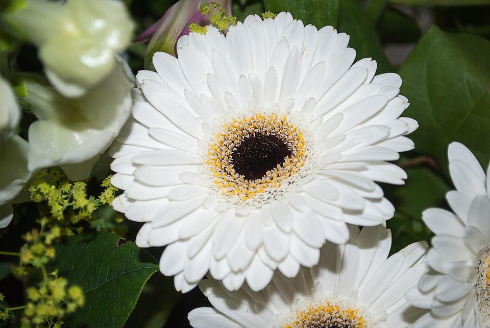 Free photo flower gerbera flowers white max pixel gerbera flower white flowers mightylinksfo