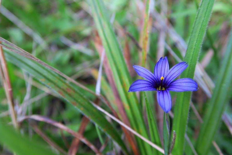 Northern California, Flower, Grass, Purple