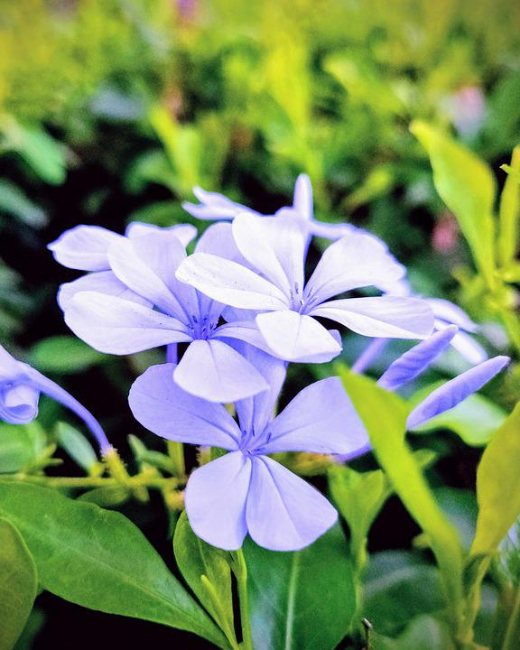 Flower, Garden, Blossom, Bloom, Green