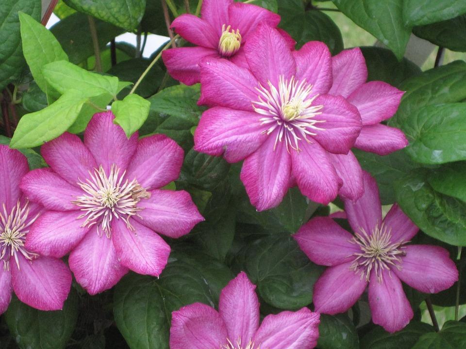 Flower, Green, Fuschia, Floral, Garden, Summer, Color
