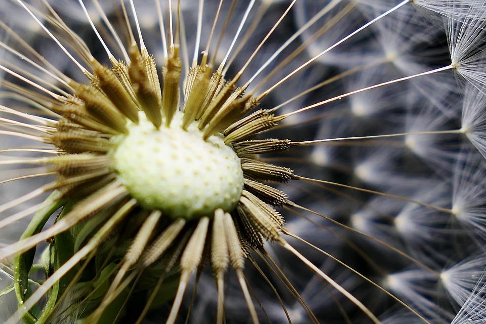 Nature, Flower, Summer, Plant, Petal, Growth, Seeds
