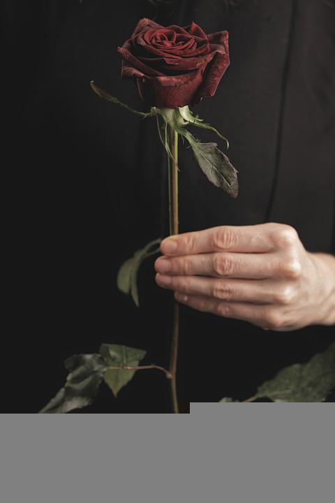 Rose, Flower, Valentine's Day, Hand, Plant, Love, Gift