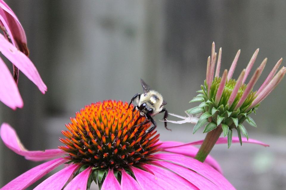 Bee, Pollen, Honey, Healthy, Pollination, Flower, Macro