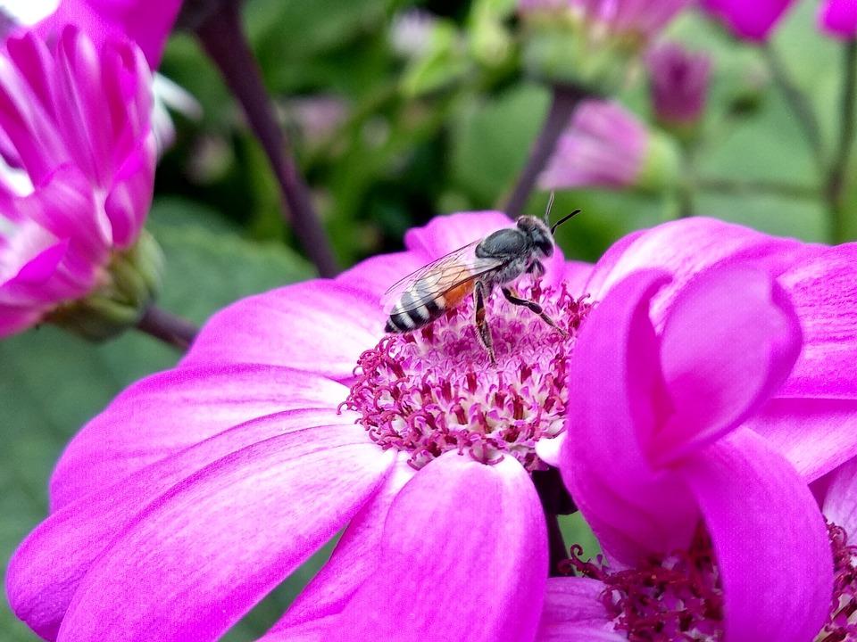 Nature, Flower, Flora, Summer, Garden, Honey Bee