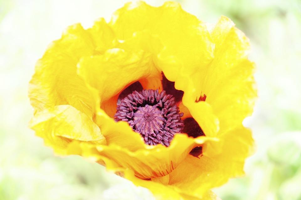 Flower, Incomplete, Flora