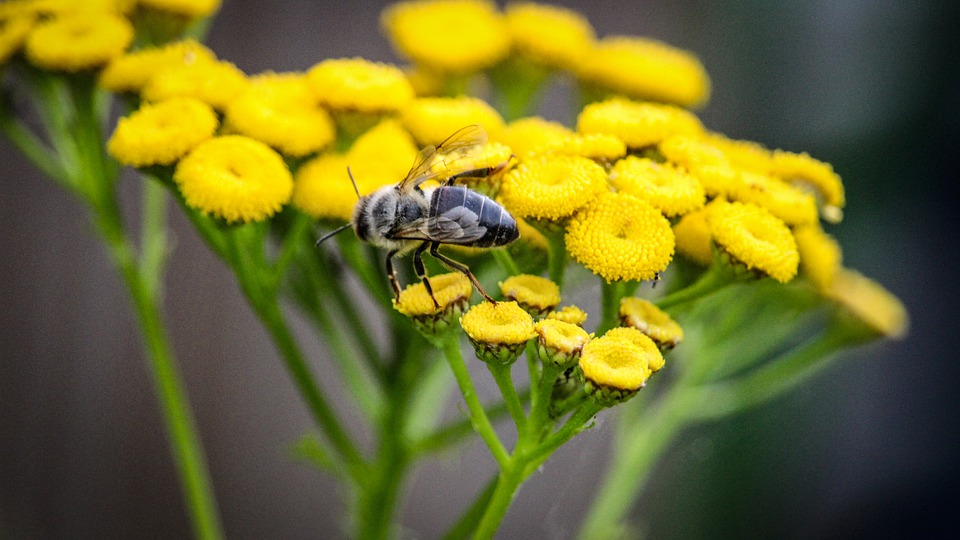 Flower, Bee, Natural, Insect, Pollination