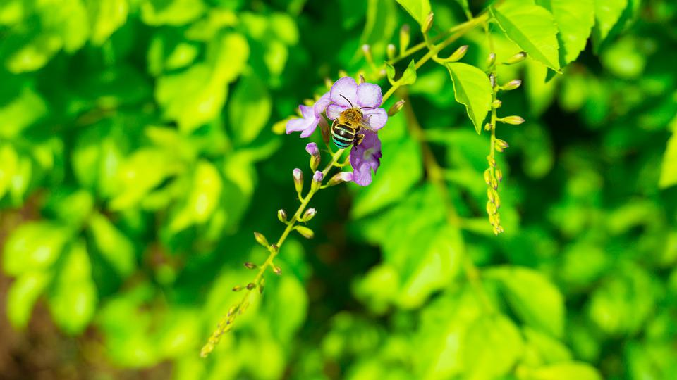 Insect, Flower, Nature, Bloom, Summer, Plant, Colorful