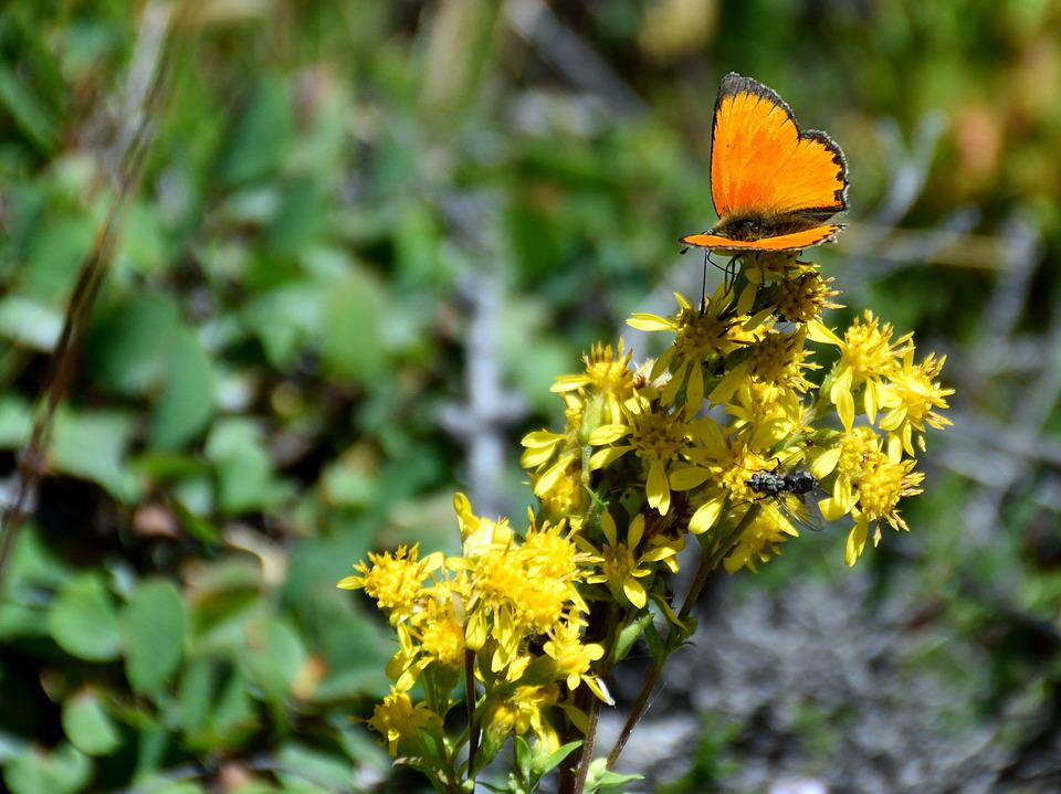 Butterfly, Flower, Nature, Insect, Yellow, Orange