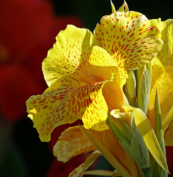 Free photo flower large flowers cup kahn yellow flower max pixel kahn flower yellow flower large flowers cup mightylinksfo